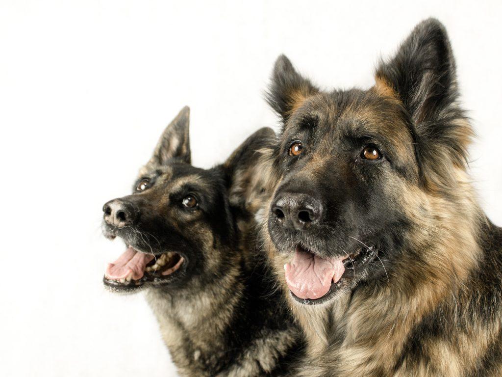 Deze honden zijn echte maatjes