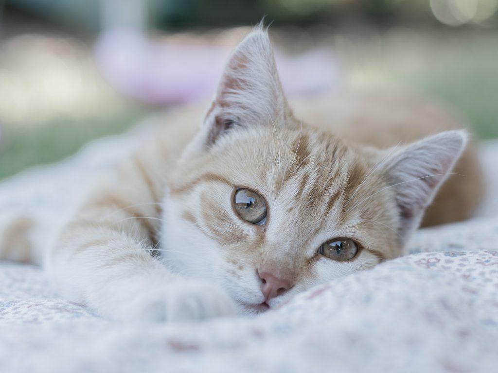 Een super lieve huiskat